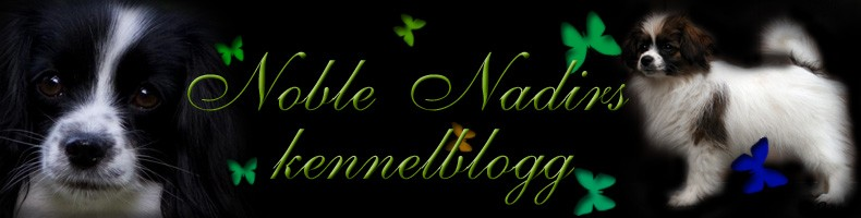 Noble Nadirs blogg